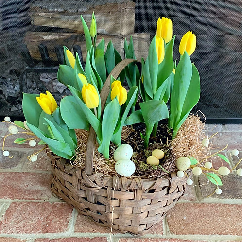 Wooden Basket with Yellow Tulips and Robins Eggs
