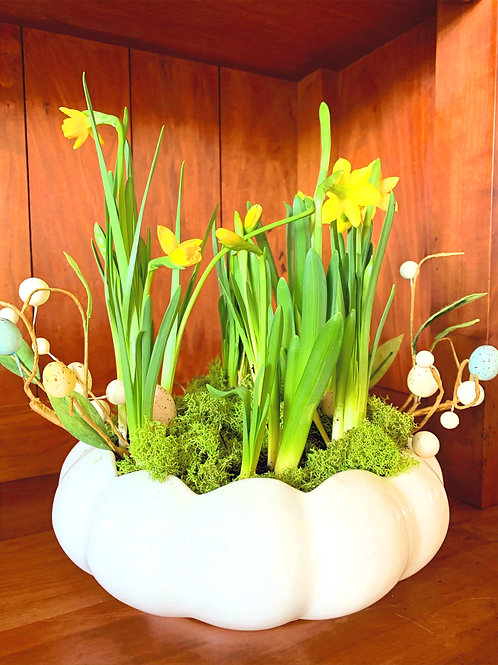 Antique White Pot with Robins Eggs and Tete Daffodils