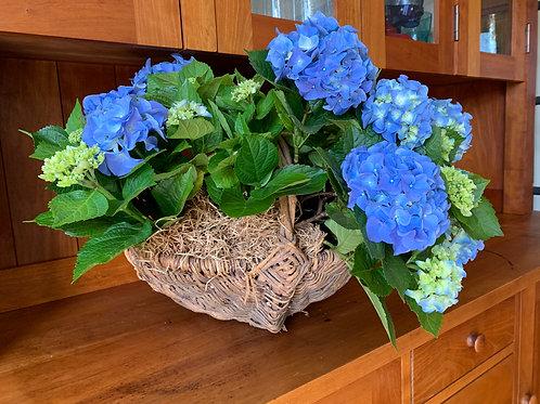 Wood Basket with Two Blue Hydrangeas