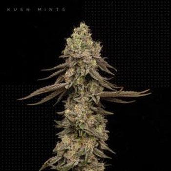 FLORACAL FARMS Kush Mints