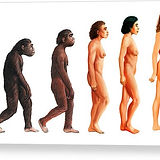 stages-in-female-human-evolution-david-g