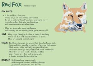 Red Fox Bio Card