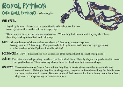 Royal Python Bio Card