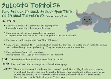 Sulcata Tortoise Bio Card