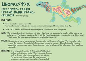 Uromastyx Bio Card