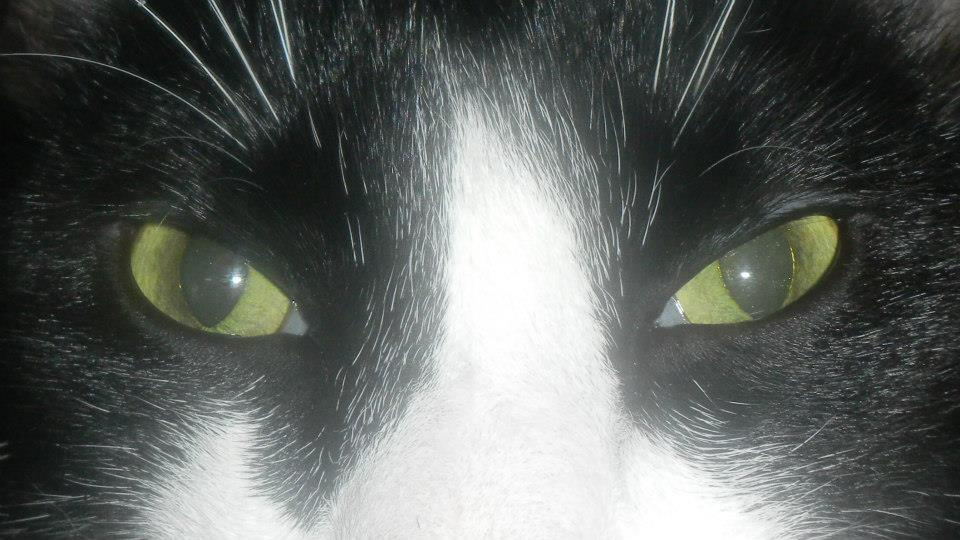 Eyes of the Putty Tat