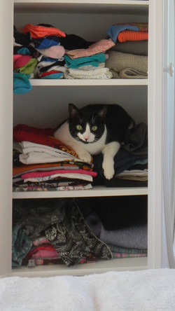 One Woman's Closet, Is A Cat's Bed