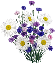 kisspng-german-chamomile-common-daisy-cl