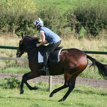 Anniesuella cantering on grass.jpg