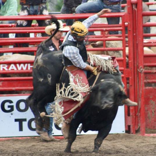 bullrider4.jpg