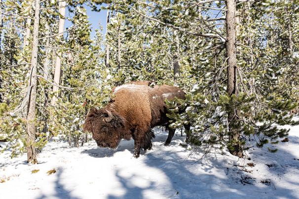 Bison Pass