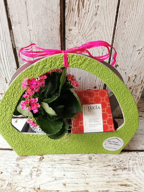 Panier cadeau (Plante & Lucia)