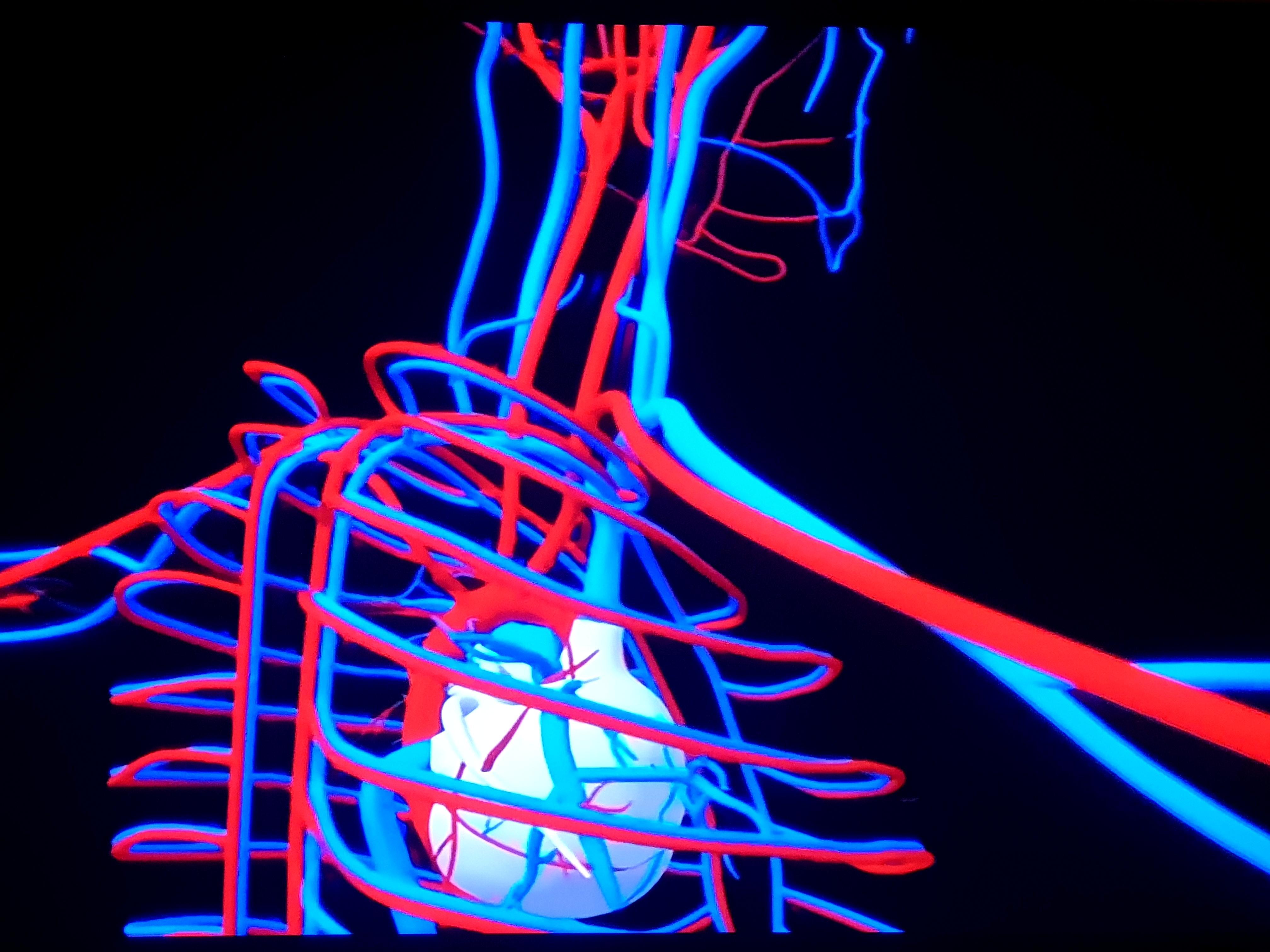 ea cons image 2 heart and ribs