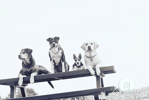 #lovemydog #dogfriends #labrador #jackru
