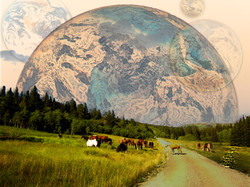 horses feeding in solar system.jpg