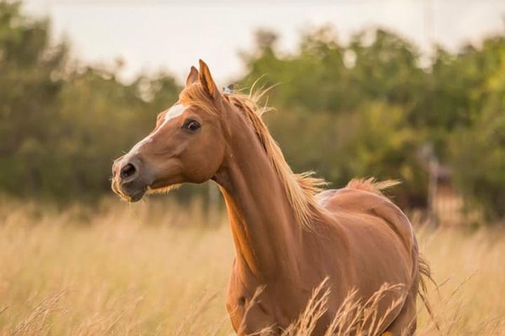 cheval qui galope.jpg