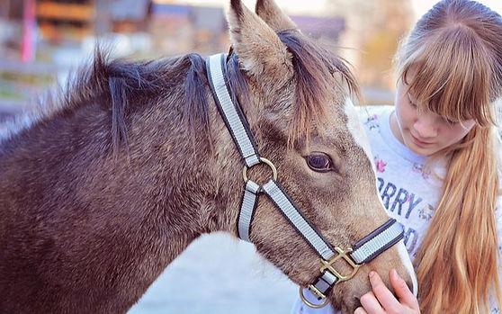foal-5733172__480_edited.jpg