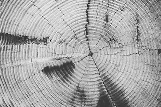 tree-rings-569037.jpg