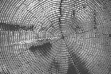 tree-rings-569037_edited.jpg
