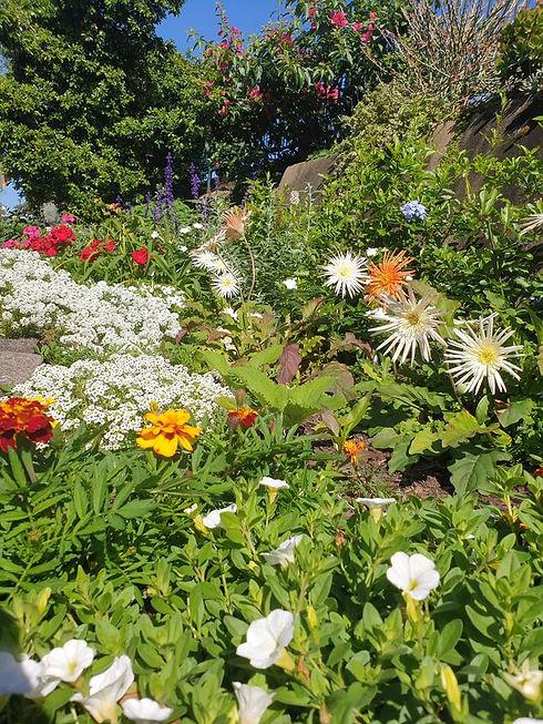 Jephson street flower bed.jpg