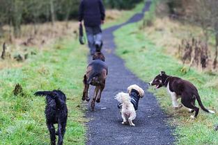Dog Walking airdrie