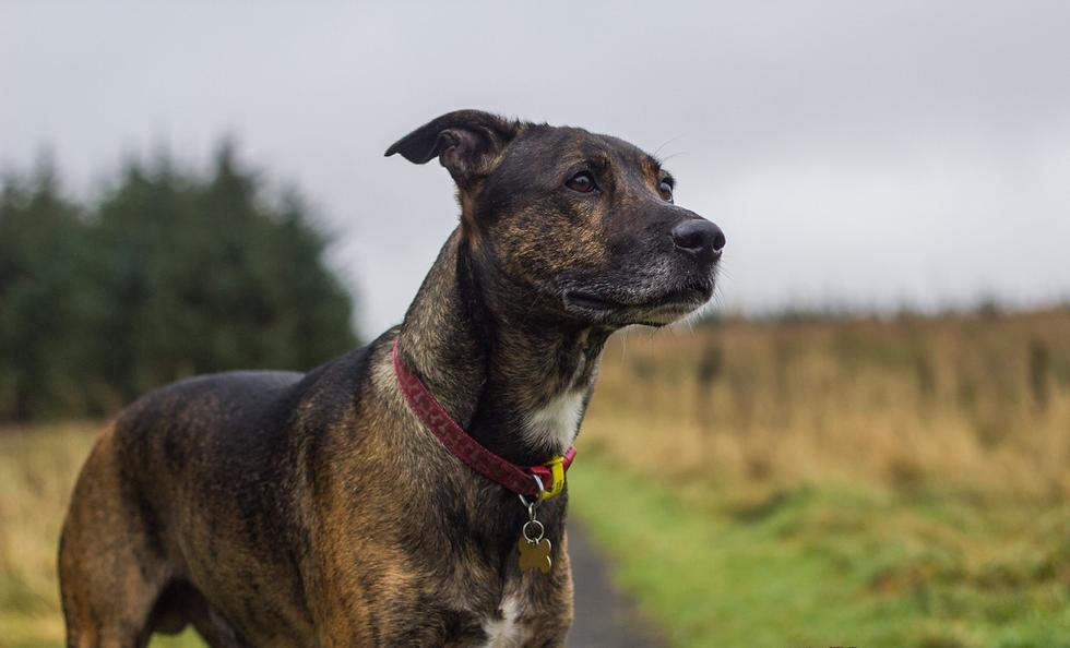 Dog Walking coatbridge