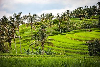 rice-1514141_640.jpg