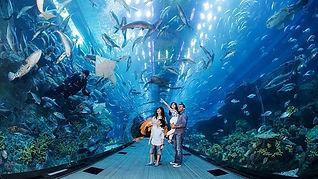 DEX Dubai-Aquarium-and-Underwater-Zoo-Desktop-ActivityDetails-1-3.jpg