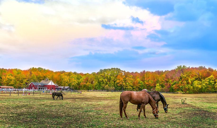 Farm_Horses.jpeg