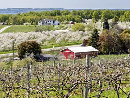Traverse City Michigan Cherry Blossoms.j
