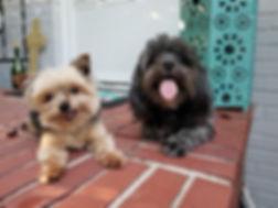 Website - pet insurance.JPG