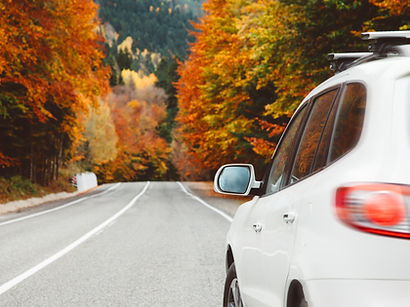 white car on road in autumn