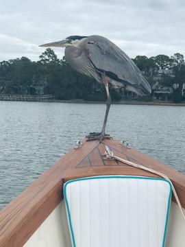 caribiana_bird.jpg