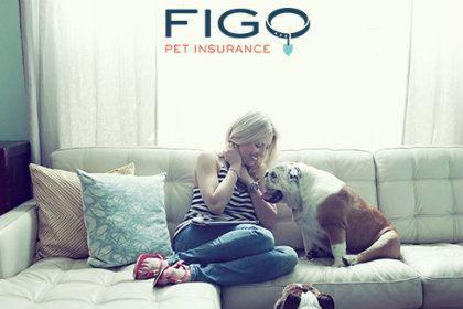 figo-petinsurance.jpg