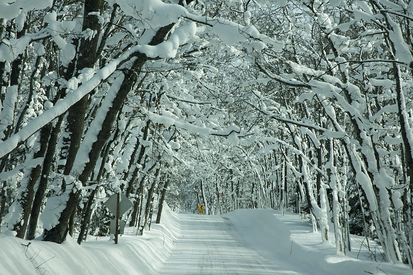 Snow Covered Road and Trees_Upper Penins