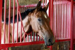 HorseDev Equicoaching&TeamBuilding