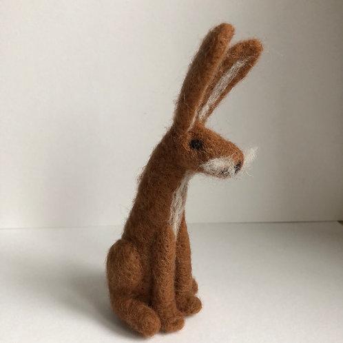 Hare Harold