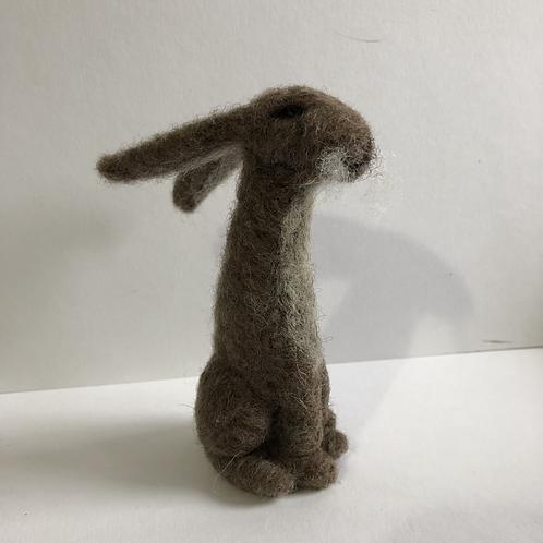 Hare Hilda