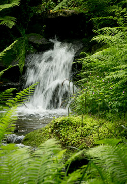 Waterfall - Landscape Photography