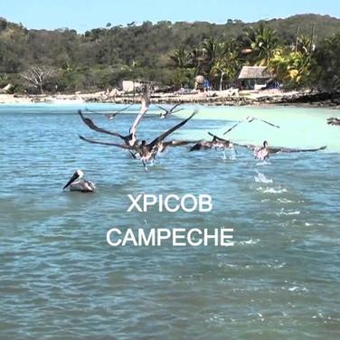 Xpicob, CPE