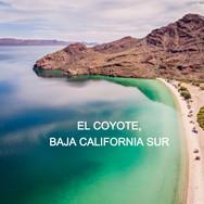 El Coyote, BCS