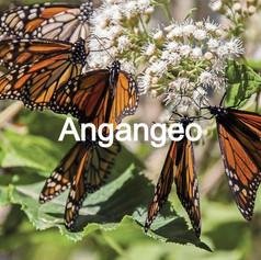 ANGANGEO