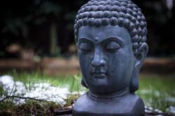 Garden in Nieuw Vennep Buddha