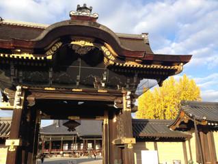 阿弥陀堂門とイチョウの黄金