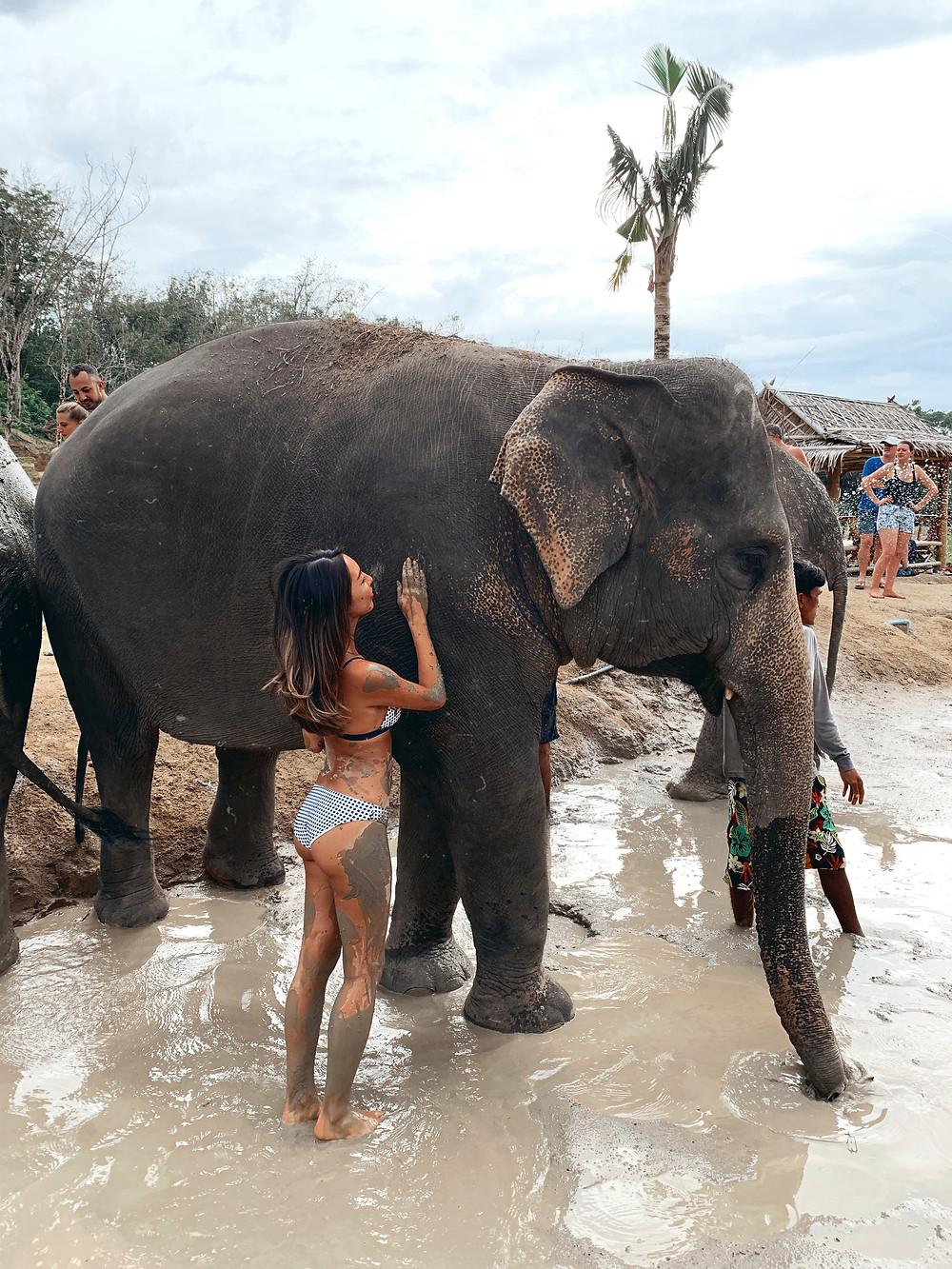 Phuket Jungle Elephant Sanctuary Thailand