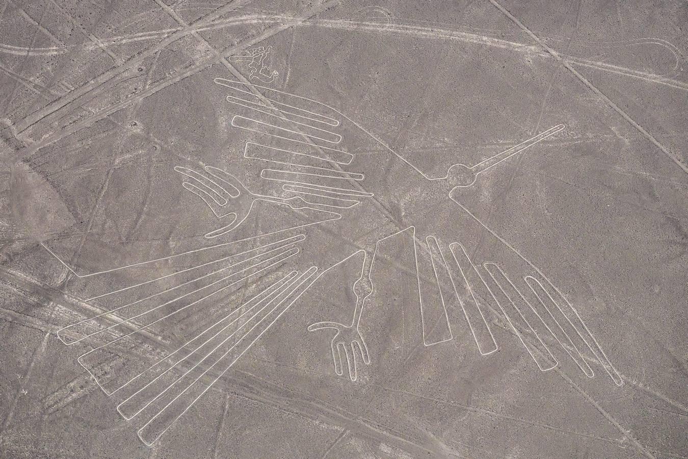 Nascalijnen - de Vogel