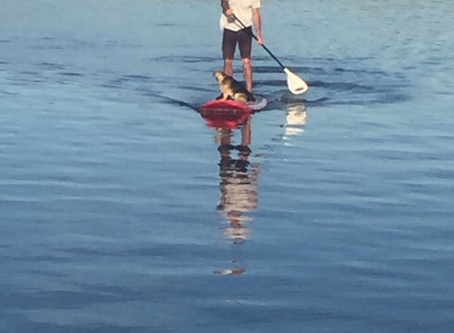 SUPping at Lake Lodge
