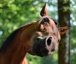 horse-3555391.jpg