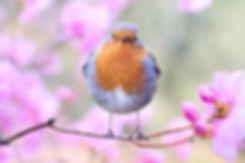 """A bird sitting on a tree is never afrai"