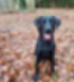 Pet care Bracknell